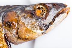 Head of roasted mackerel fish. Stock Images