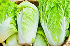 A head of romaine lettuce Stock Photography
