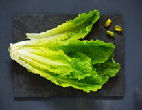 Head romaine lettuce Royalty Free Stock Image