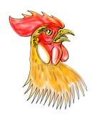 head rooster för ungtupp Royaltyfri Bild