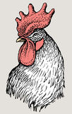 Head of rooster vector illustration