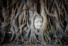 Head& x27 ; s Bouddha dans des racines d'arbre Photo libre de droits