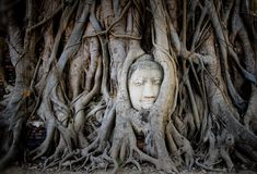 Head& x27;s buddha in tree roots Royalty Free Stock Photo