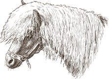 Head of the sad pony Stock Photo