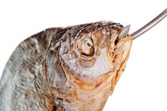 Head of salted fish with a hook in his mouth Royalty Free Stock Image