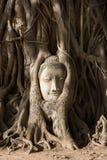 Head of sand stone buddha in Ayutthaya Stock Image