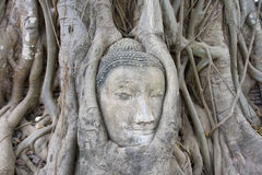 Head of Sandstone Buddha Royalty Free Stock Images