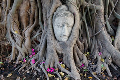 Head of Sandstone Buddha. In The Tree Roots at Wat Mahathat, Ayutthaya, Thailand Stock Photos
