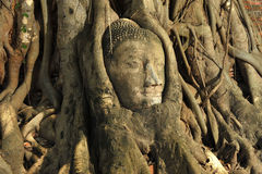 Head of Sandstone Buddha at Ayutthaya. Stock Photography