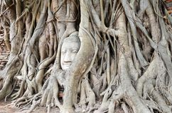 The head of the sandstone buddha image Royalty Free Stock Images