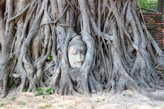The Head of The Sandstone Buddha image in tree roots at Wat Mahathat, Ayutthaya, Thailand stock image