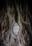 Head of Sandstone Buddha overgrown by Banyan Tree Stock Photo