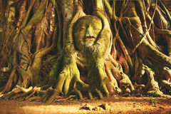 Head of Sandstone Buddha in The Tree Roots Royalty Free Stock Photo