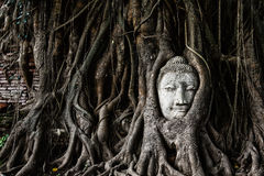 Head of Sandstone Buddha Stock Photography