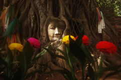 Head of Sandstone Buddha in The Tree Roots at Wat Mahathat Stock Images