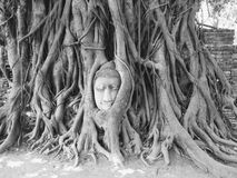 Head of Sandstone Buddha in The Tree Roots at Wat Mahathat, Ayut Stock Photo
