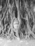 Head of Sandstone Buddha in The Tree Roots at Wat Mahathat, Ayut Royalty Free Stock Image