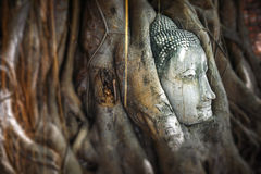 Head of Sandstone Buddha in The Tree Roots at Wat Mahathat, Ayut Stock Photos