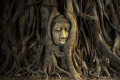 Head of Sandstone Buddha in The Tree Roots at Wat Mahathat, Ayut stock image