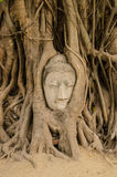 Head of Sandstone Buddha in The Tree Roots Stock Photography