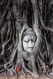 Head of Sandstone Buddha in The Tree Roots from Wat Mahathat, Ayutthaya Royalty Free Stock Photo