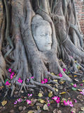 Head of Sandstone Buddha in The Tree Roots at Wat Mahathat Royalty Free Stock Images