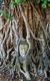 Head of Sandstone Buddha Stock Images