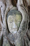 Head of Sandstone Buddha Royalty Free Stock Photography