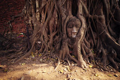 Head of Sandstone Buddha in The Tree Roots Royalty Free Stock Photos