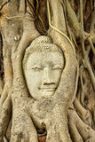 Head of Sandstone Buddha in The Tree Roots at Wat Mahathat, Ayutthaya, Thailand Stock Images