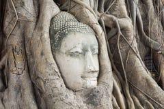 Head of Sandstone Buddha Stock Photography