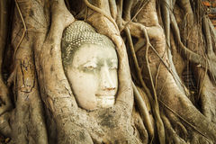Head of Sandstone Buddha Royalty Free Stock Photography