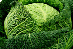 Head of the Savoy cabbage Royalty Free Stock Image
