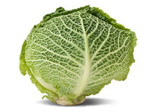 Head of savoy cabbage Stock Image