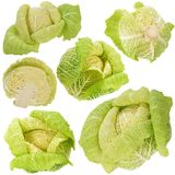 Head of Savoy Cabbage Stock Photography