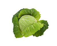 Head Savoy cabbage on a white background Stock Photo
