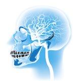 Head scan vector illustration