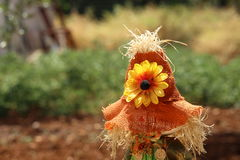 Head scarecrow, with real fly, in the garden Royalty Free Stock Photography