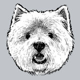 Head of the Scottish terrier. Vector drawing of the head of the lap dog royalty free illustration