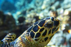 Head of sea turtle Stock Images