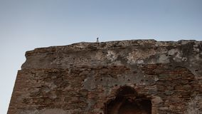 Seagull on ruins of ancient architecture stock photography