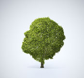 Head shaped tree. A large head shaped tree Royalty Free Stock Photography