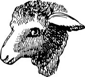 Head of sheep Stock Photography