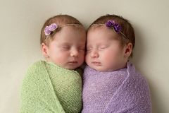 Head Shot of Fraternal Twin Newborn Girls. Headshot of fraternal twin newborn baby girls swaddled in light green and lavender stretch wrap material stock image