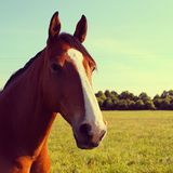 A Head Shot of a Horse Royalty Free Stock Photography