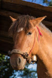 The head shot of a horse Royalty Free Stock Images