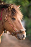 The head shot of a horse Royalty Free Stock Photos