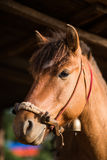 The head shot of a horse Stock Photo