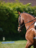 Head Shot of Horse Doing Dressage Royalty Free Stock Photos