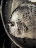 Head of silvery fish with sad eye, loneliness and melancholia, sense of abandonment and sadness. Beautiful and original background and cover Stock Photography
